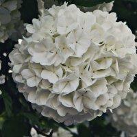 Цветы :: Виктория Гончаренко
