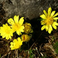 весна :: евгений Смоленцев