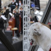 музыка для всех :: Тамара Бердыева