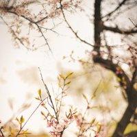 весна :: Дарья Чекушкина