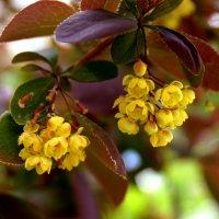 Весенний цвет :: Евгений Кочуров