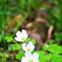 в лесу :: Наталья C
