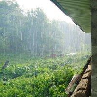 Дождливый день :: Serega Денисенко