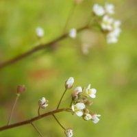 цветок :: Юля Гайдук