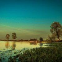 Комариный рай :: Денис Соломахин