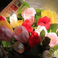 Тюльпаны :: Akemi Miu