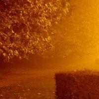 Вечерний туман :: Олег Хатефов