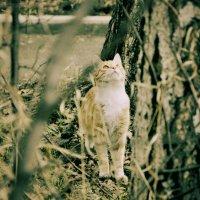 cat :: валентина Чемякина