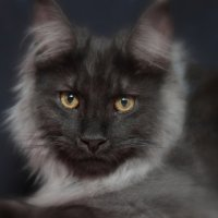 Не совсем чёрная кошка, в не совсем чёрной комнате :: Владимир Сарычев