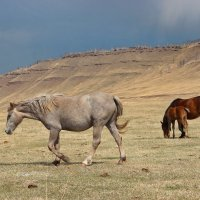 Понурая лошадка. :: Наталья Юрова