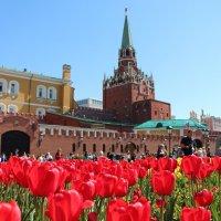 Тюльпаны :: Любовь Бутакова