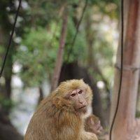 Поездка в город Кси Чанг :: Андрей Фиронов