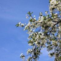 Весна :: Юлия Харина