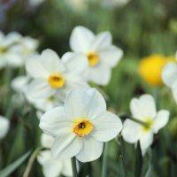 Цветы :: Юлия Харина