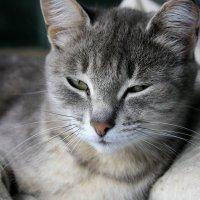 Кошка Лиза :: Виктор