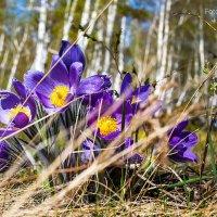 Весна :: Павел Новоселов