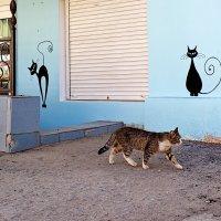 Жил да был чёрный кот за углом ... :: Арсений Корицкий