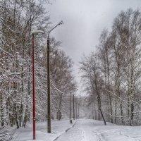 Зимняя композиция :: Roman Norkin