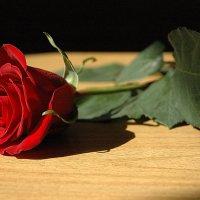 роза :: Евгений Фролов