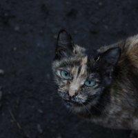 грустная кошка :: Юлия Хазова