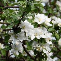 весна :: Анастасия Тимофеева