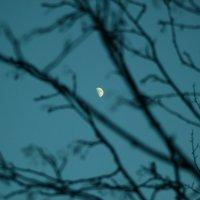 вечерняя луна :: евгений Смоленцев