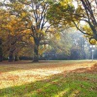 Осенний утрец... :: АндрЭо ПапандрЭо