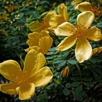 Майские цветы  Ботанического сада-4 :: Владимир Бровко