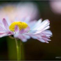 цветы :: yameug _