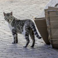 А! Енто ты!-из серии Кошки очарование мое! :: Shmual Hava Retro