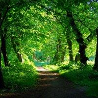 зеленый туннель :: юрий иванов