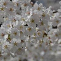 весна :: Катерина Марченко