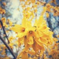 Цветы :: Kamilla Gazizova