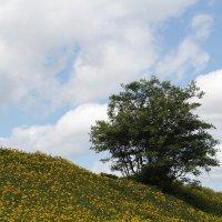 Одуванчики, одуванчики и одинокое дерево....а весеннее настроение хорошее!!! :: Олег Фролов