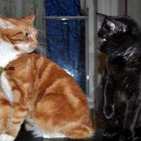 Мои коты Кокос и Кузьма. :: Виталий Виницкий
