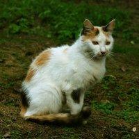 Кошка умеет вымурчать себе прощение за что угодно :: Валерия Халецкая