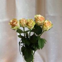 Светлые розы :: Aнна Зарубина