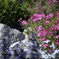 полевые цветы :: Дмитрий Линник