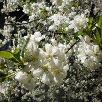 Вот и весна! :: Наталья Тимошенко