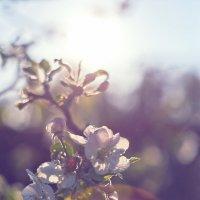 Цветы на закате 4 :: DmitryLis