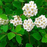 Белый цвет первого мая :: Аня Андрейчук