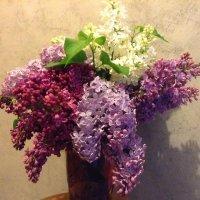 И снова май... И вновь сирень цветёт... :: мария п