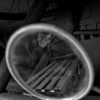 В зеркале... :: Павел Зюзин