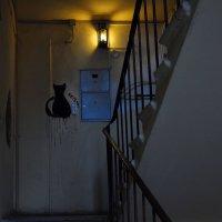 Никто не виноват, что черный Кот теперь играет вечно с вами в прятки :: Ирина Данилова