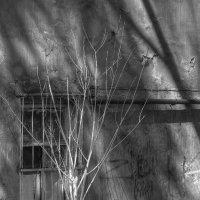 деревце :: Юрий Каркавцев