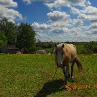 Жил был Конь!!! :: Олег Семенцов