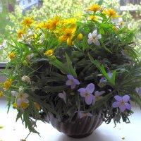 Весны букет и нежный аромат :: Нина северянка