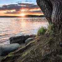 Закат притаился в деревьев корнях :: Юлия Батурина