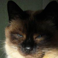 Солнечный свет разбудил котика (Базик) :: Диана Одинцова