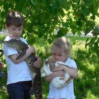 Крокодил и кролик :: Мила